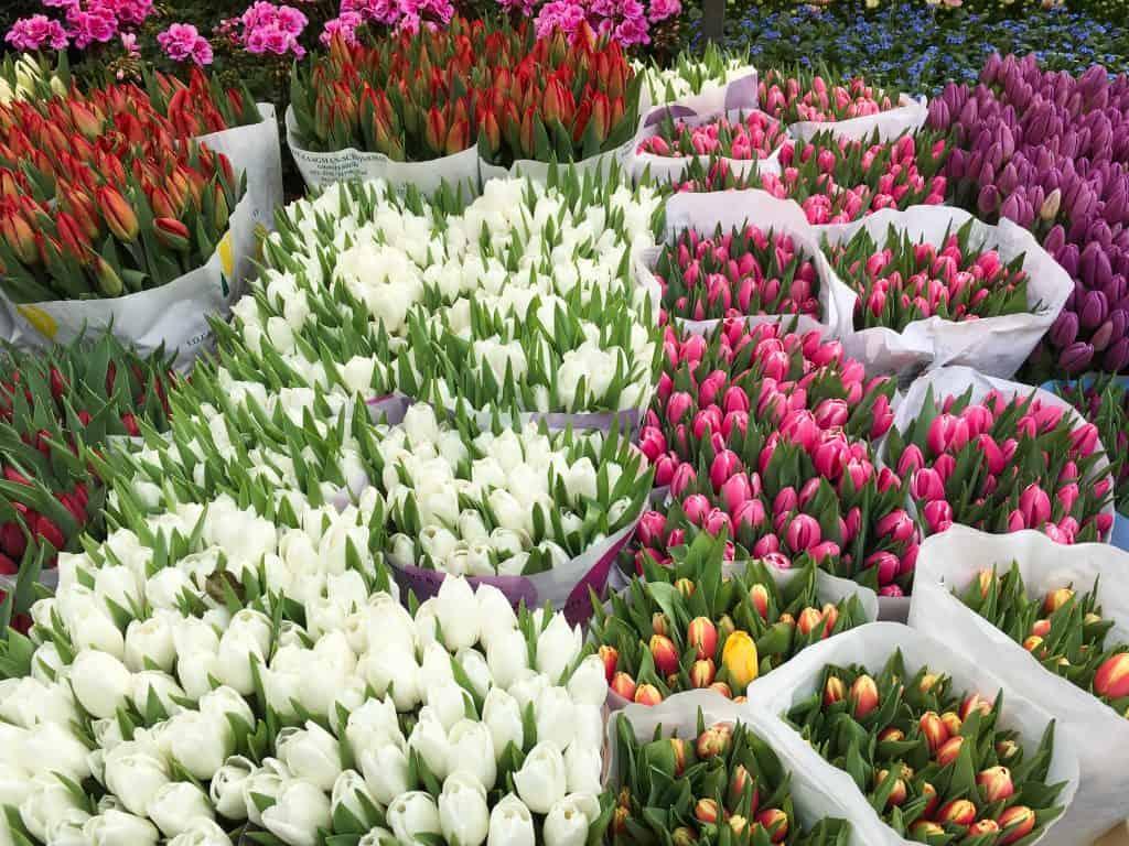 Amsterdam off the beaten path   Tulips