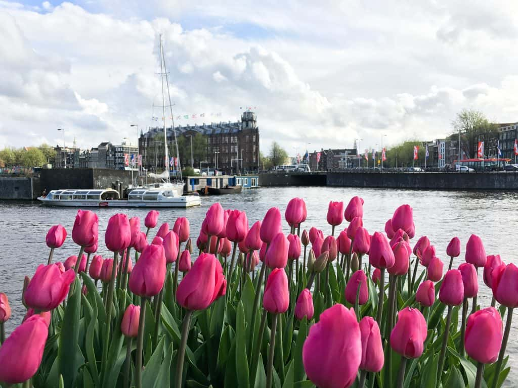 Amsterdam Off the Beaten Path | Beautiful Tulips in Amsterdam, The Netherlands