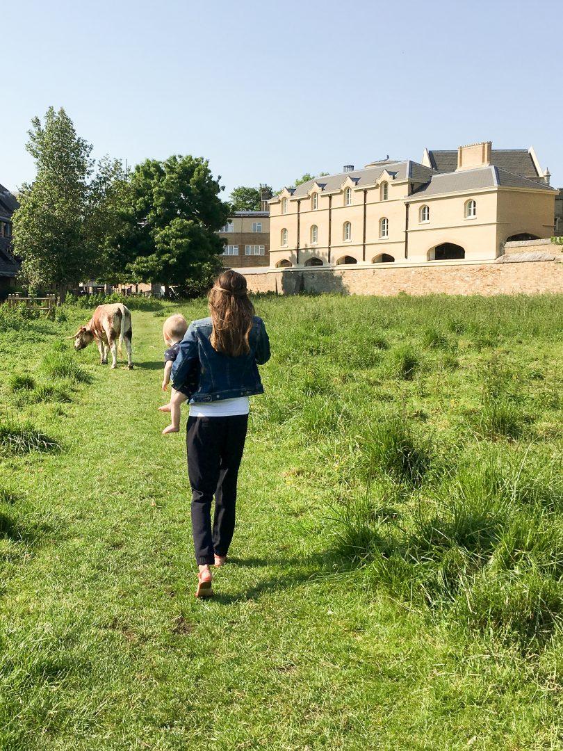 Meadows in Cambridge, England