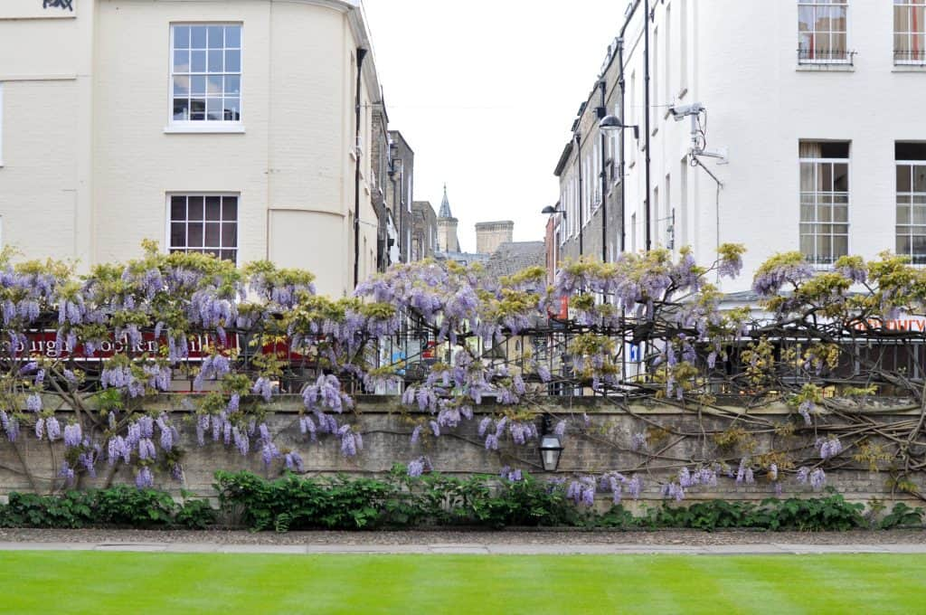 Sidney Sussex at Cambridge University, England | The 5 Best Cambridge Colleges You Must Visit | After visiting all 31 colleges of the University of Cambridge in England, we've picked the 5 best Cambridge colleges to visit. With beautiful gardens and buildings that looks like castles, it often feels like you're stepping back in time and into a fairytale when you pass through the college gates.