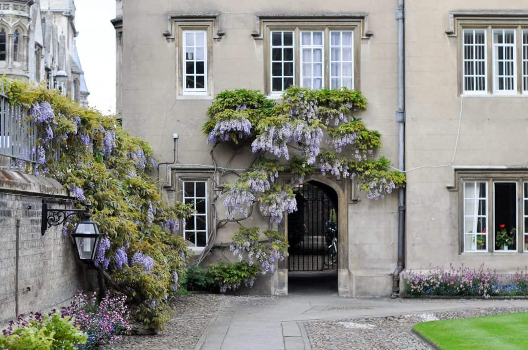 Sidney Sussex at Cambridge University, England with the wisteria in bloom