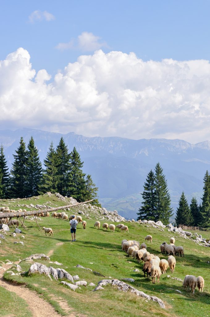 Carpathian Mountains, Romania | Hiking in the Piatra Craiului Mountains