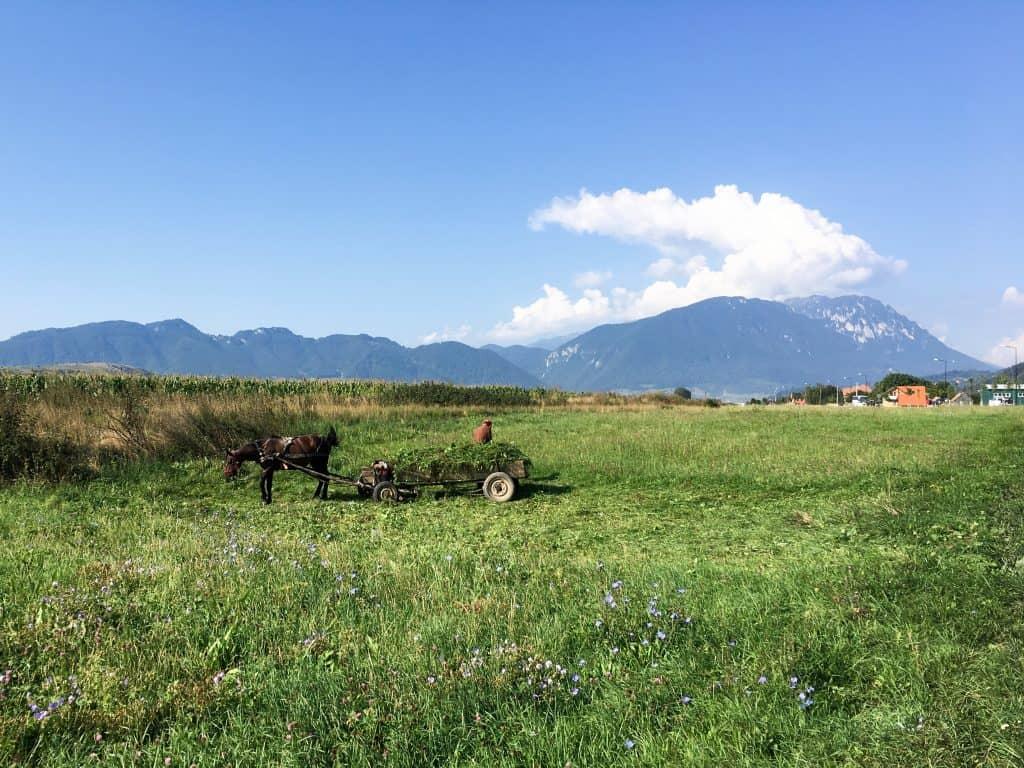 Horse drawn carts in Zarnesti, near the Carpathian mountains in Romania | Hiking in Romania