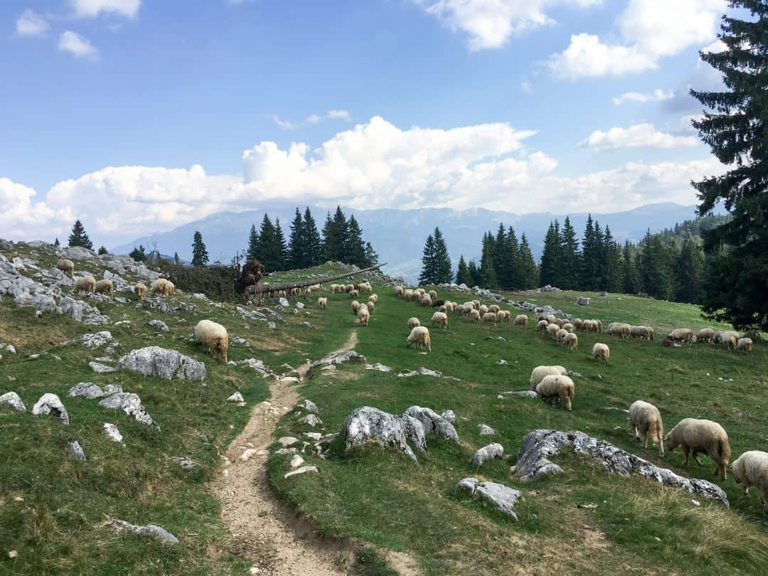 Hiking in Romania, the Piatra Craiului Mountains
