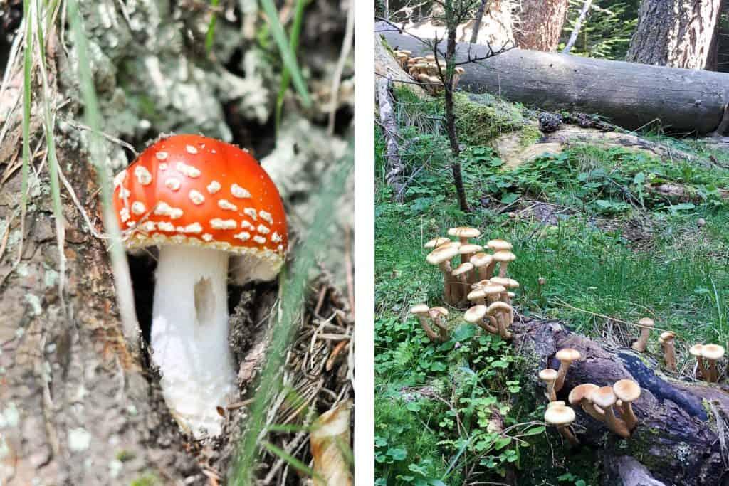 Mushrooms in the Piatra Craiului Mountains, Romania