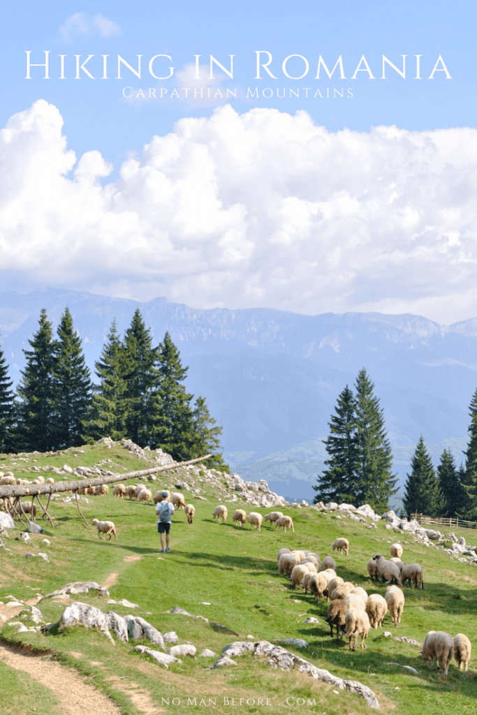 Hiking in Romania | Trekking through the Piatra Craiului Mountains was an unforgettable hiking experience. Massive limestone ridges, wandering out from the dense old-growth spruce forests into an open canyon with amazing views, wandering through sheep following the call of their herder, all with a hearty slice of cake on top.