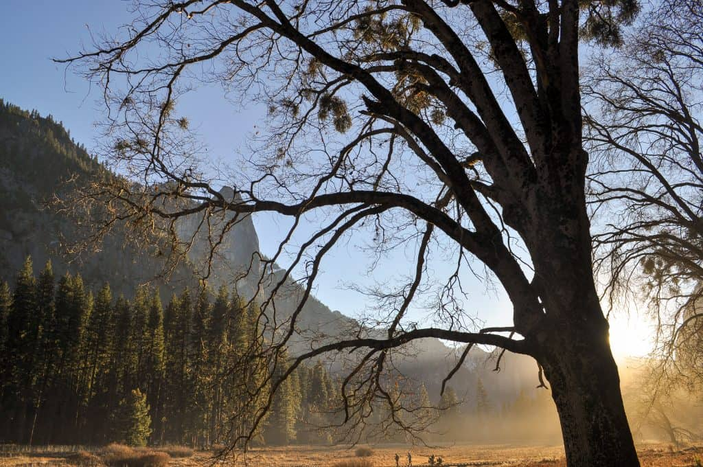 Hiking in Yosemite | Sunrise in Yosemite Valley