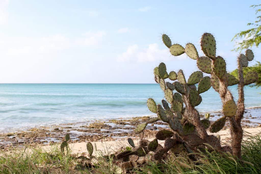 Eagle Beach, Aruba | Three Days in Aruba: Adventures Beyond the All-Inclusive