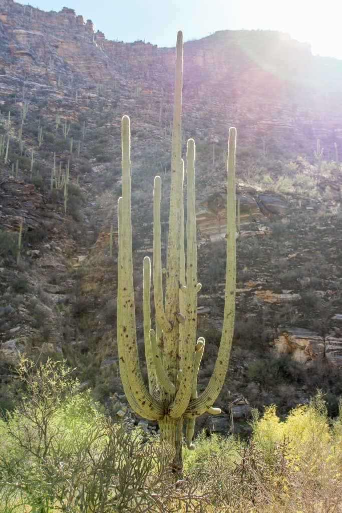 A Weekend Getaway in Tucson, Arizona | Where to stay, hike, play and eat in Tucson | Seven Falls Trail in Sabino Canyon