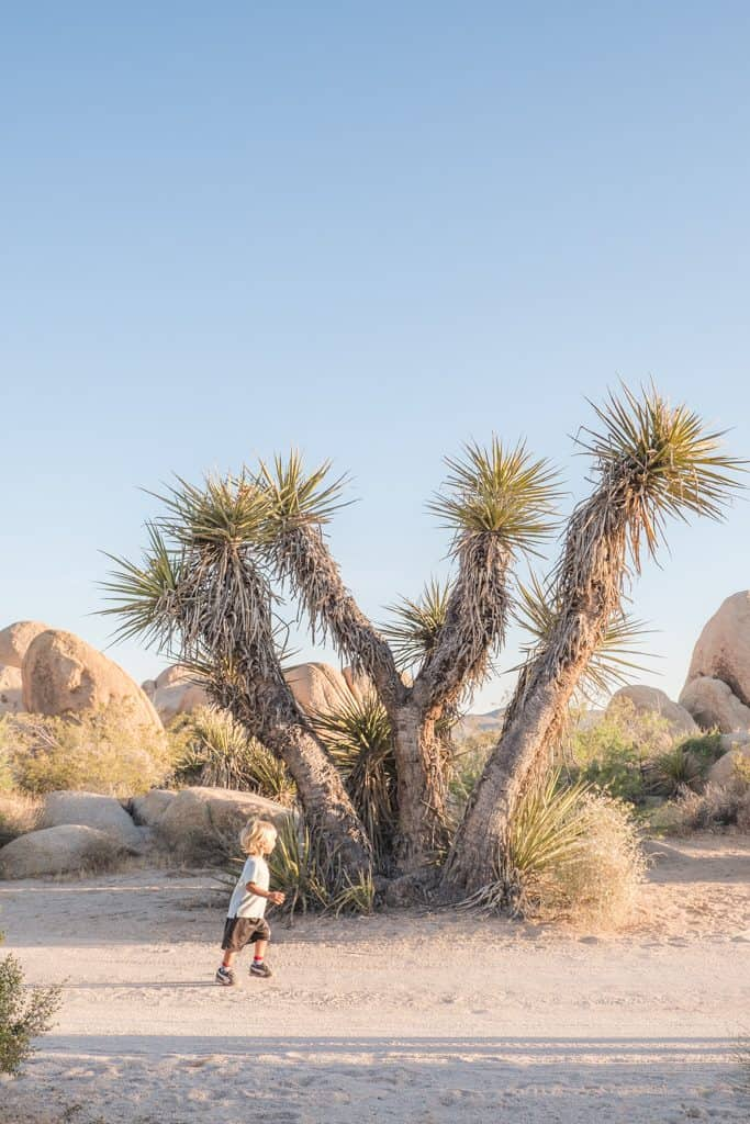 Summer Camping in Joshua Tree National Park, California