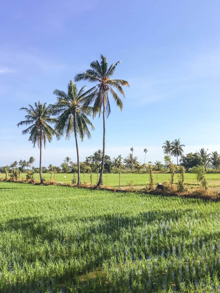 20 Photos to Inspire You to Visit Lombok | Rice Paddies in Lombok, Indonesia | Reasons to Visit Lombok, Indonesia