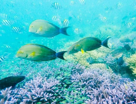 Diving in Coron, Philippines   Tips for Diving and Getting your PADI Open Water Diver Certification in Coron