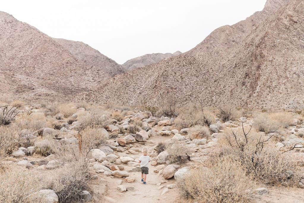 Borrego Canyon Hike in Anza-Borrego State Park | A Complete Guide to Anza-Borrego Desert State Park