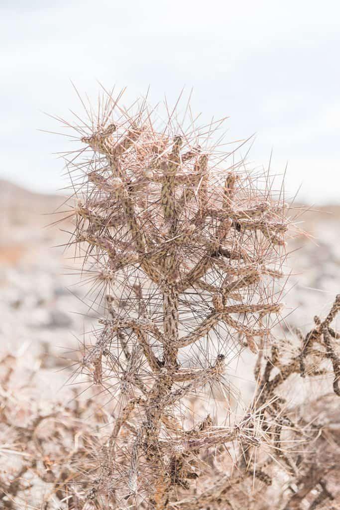 Cactus in Anza Borrego Desert State Park