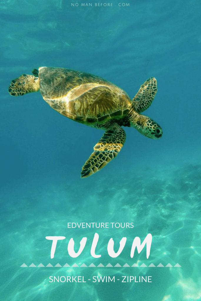 Sea Turtles, Cenotes and Ziplining: A High-Adventure Tulum Excursion with Edventure Tours Tulum