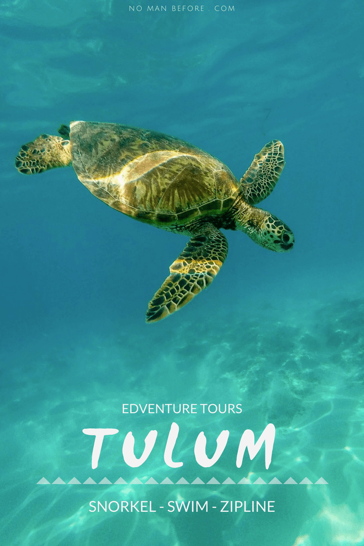Snorkel with sea turtles in Akumal Bay, swim in cenotes and zipline through the jungle. For an action-packed Tulum excursion, book a tour with Edventure Tours Tulum. #tulum #mexico #tulumtour #akumal #adventuretravel