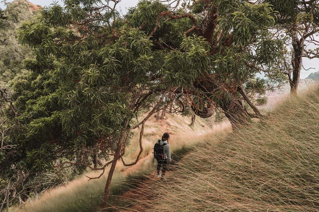 Hiker on the Kalepa Ridge Trail