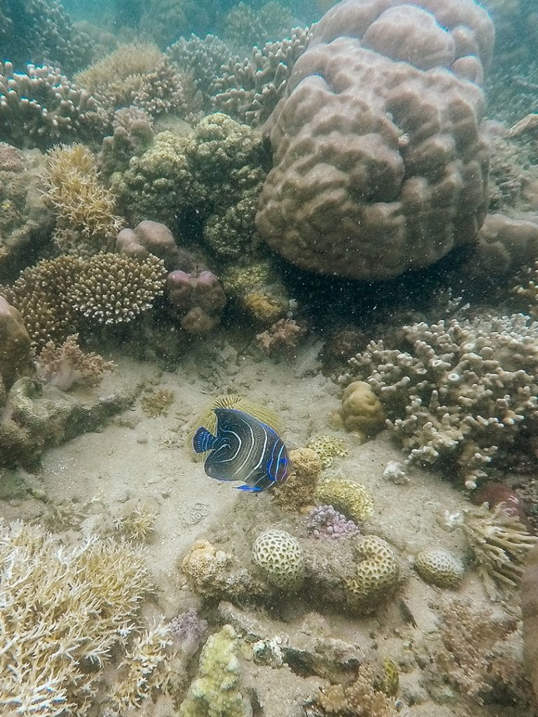 Coral Reef in Lombok, Indonesia | A Guide to Buying Reef-Safe Sunscreen
