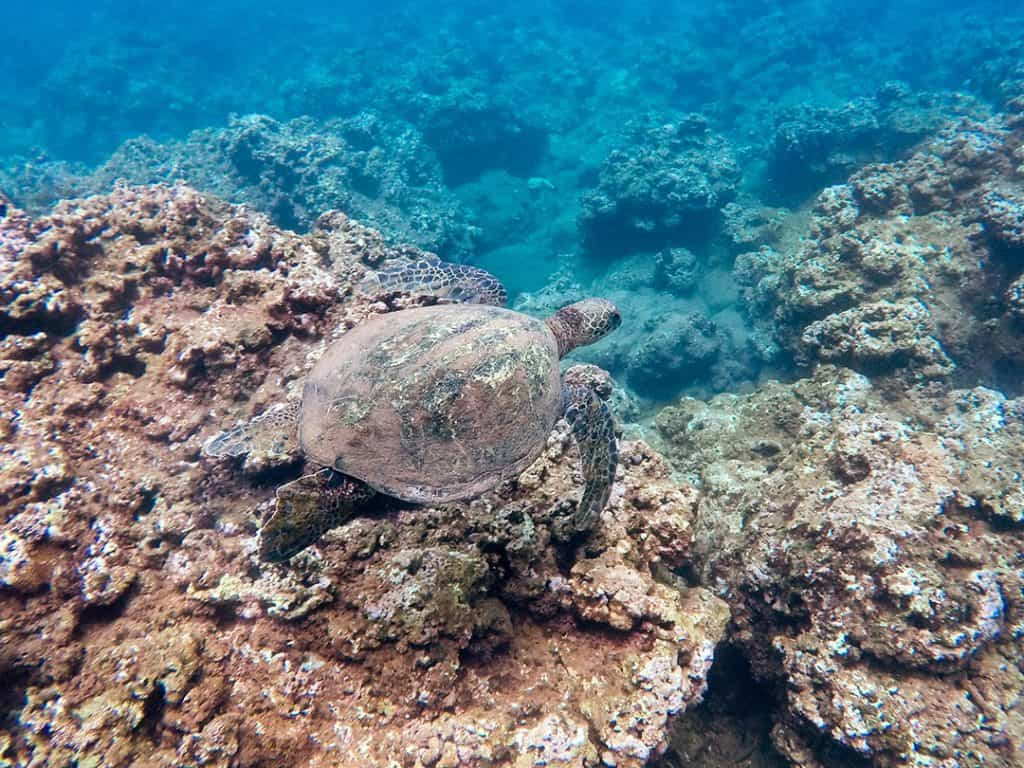 Turtle swimming along coral reef | Use reef-safe sunscreen