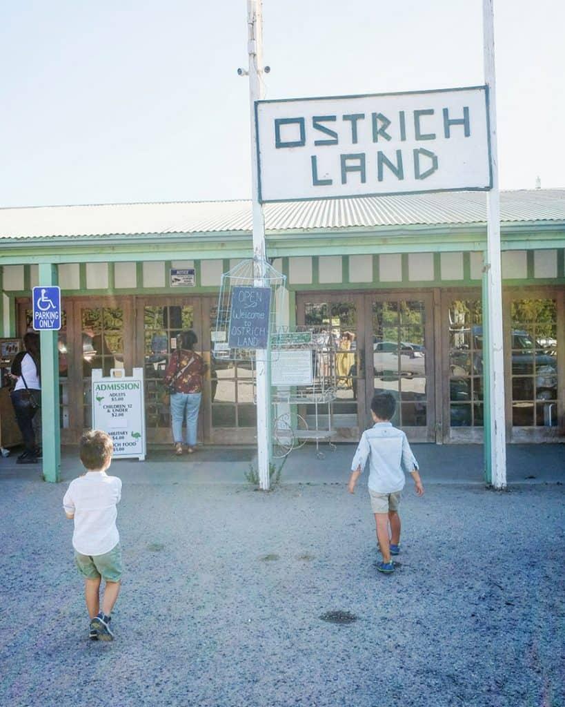 Ostrich Land near Santa Barbara, Ca