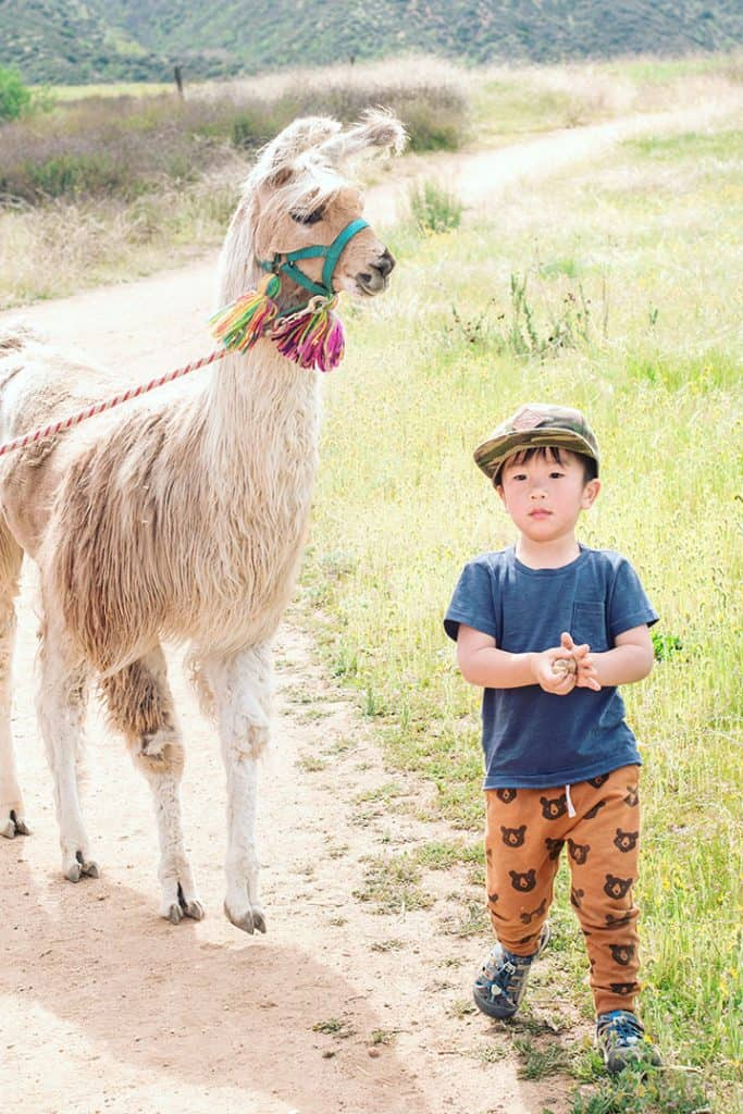 Llama Hike at Oak Hollow Farm | Airbnb Experiences | Tips for booking the coolest rentals and camping spots in Southern California