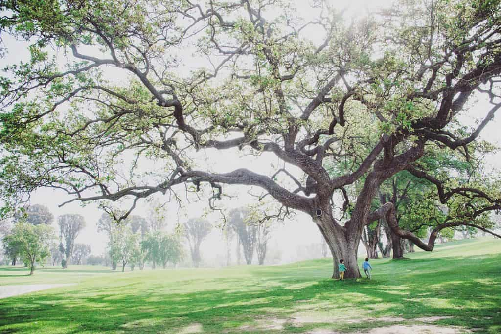 Ojai Valley Inn in Ojai, California   Tips for booking the coolest rentals and camping spots in Southern California