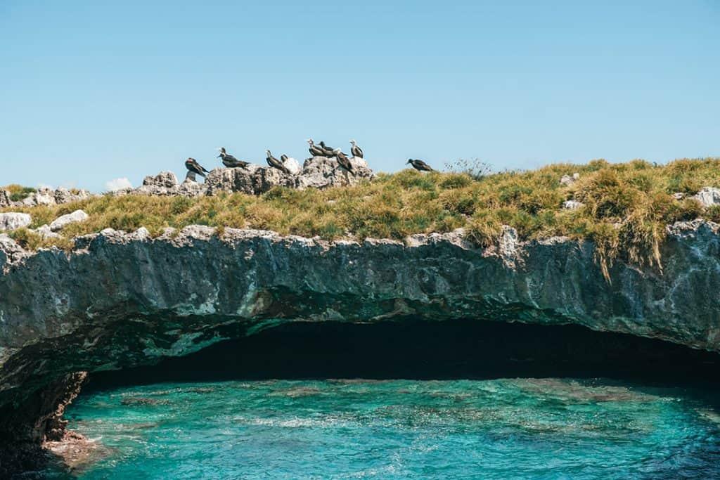 Blue-footed boobies on the Marieta Islands near Puerto Vallarta, Mexico