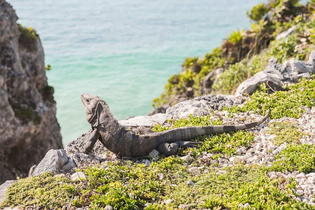 Visit the Mayan Ruins in Tulum | Adventurous Things to Do in Tulum, Mexico