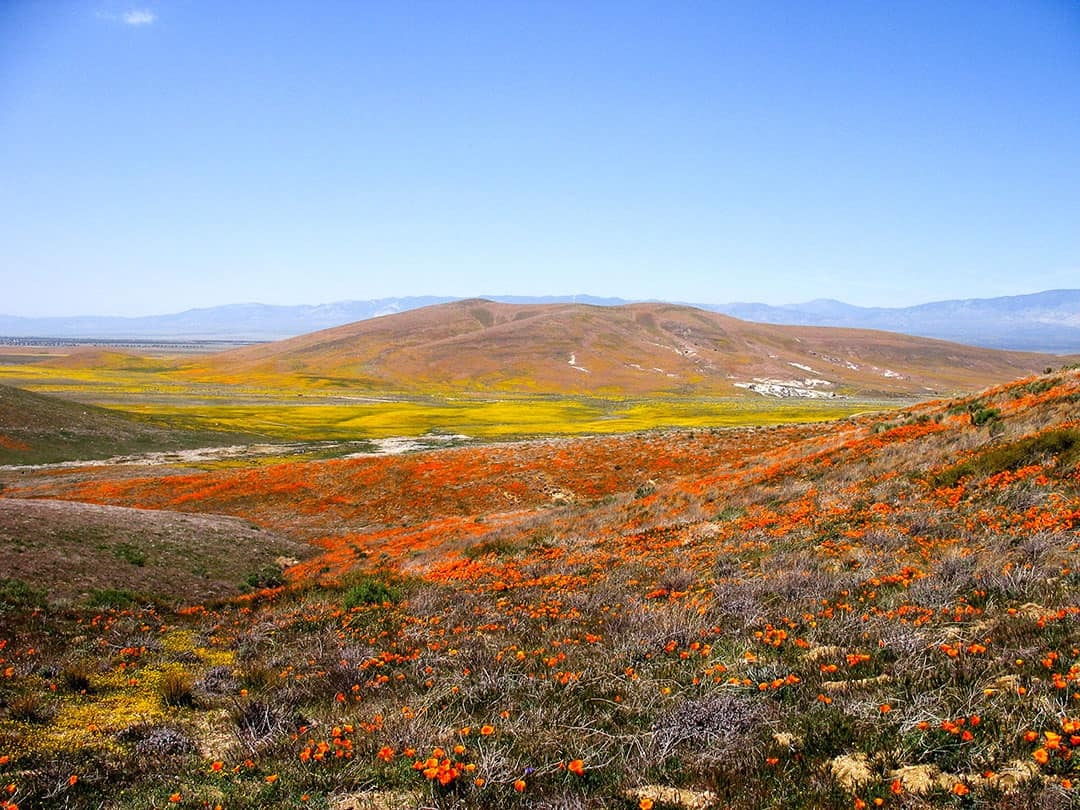 Antelope Valley Poppy Reserve | Best Places to See Wildflowers in Southern California
