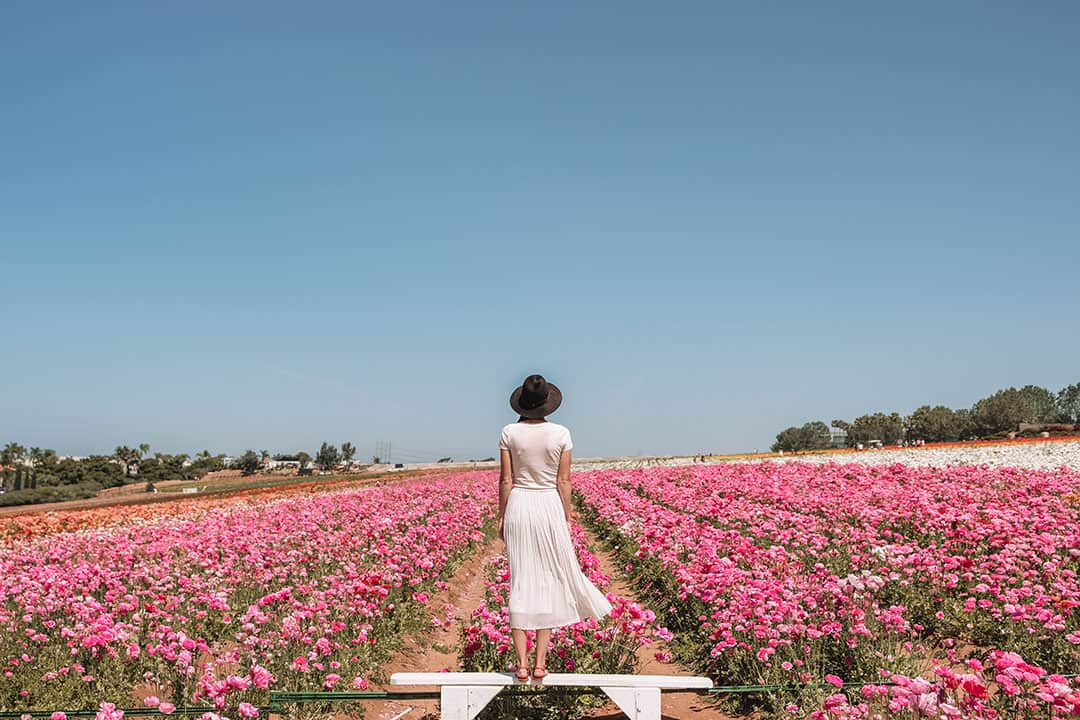 Carlsbad Flower Fields | Best Places to See Flowers in Southern California