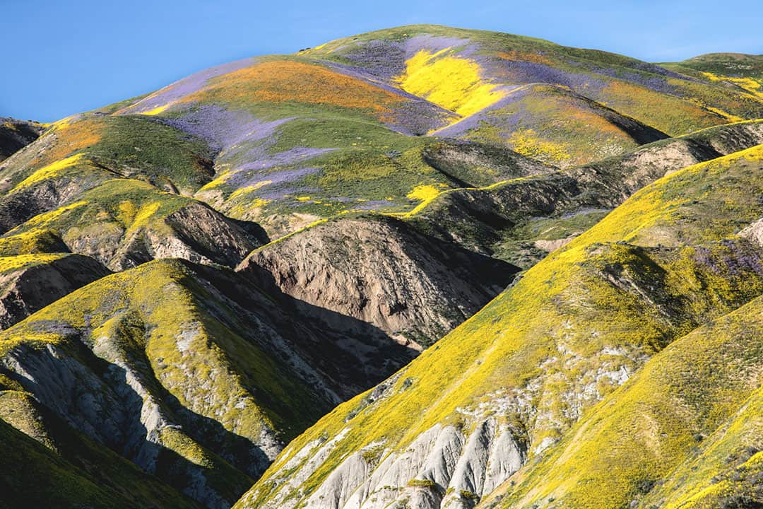 Flower-covered hills in Carrizo Plain National Monument | Best Places to See Wildflowers in Southern California