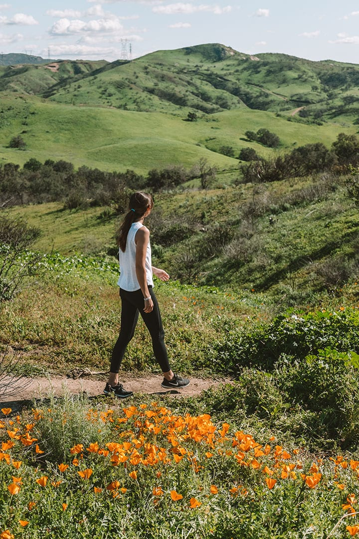 Golden Poppies in Santiago Oaks Regional Park in Orange County, California