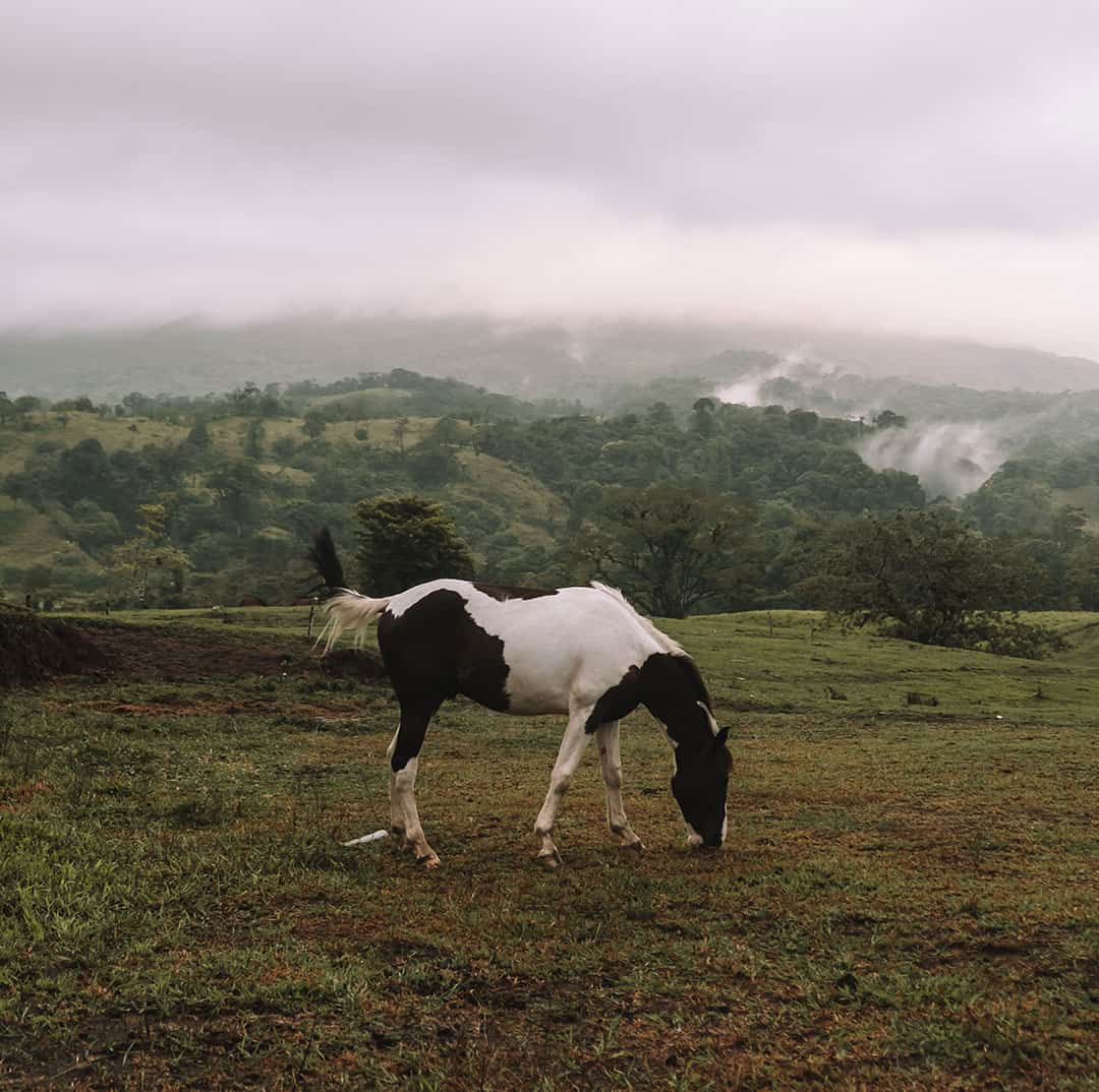 Horse grazing in La Fortuna, Costa Rica
