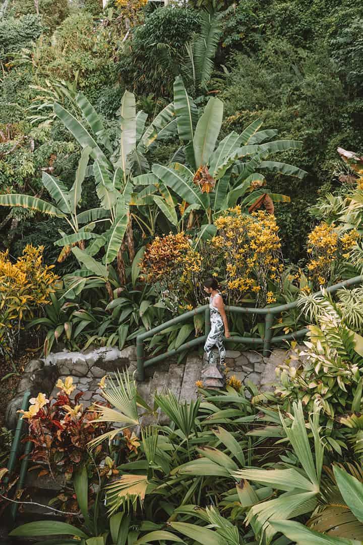 Lush grounds at Si Como No Resort