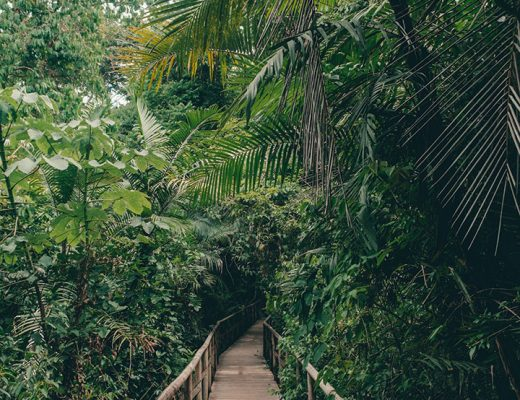 11 Tips for Visiting Manuel Antonio National Park in Costa Rica