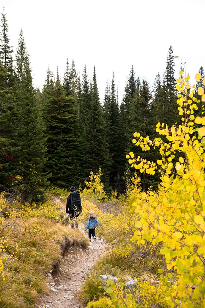 Yellow Aspens along Trail to Alice Lake in Sawtooth Wilderness, Idaho