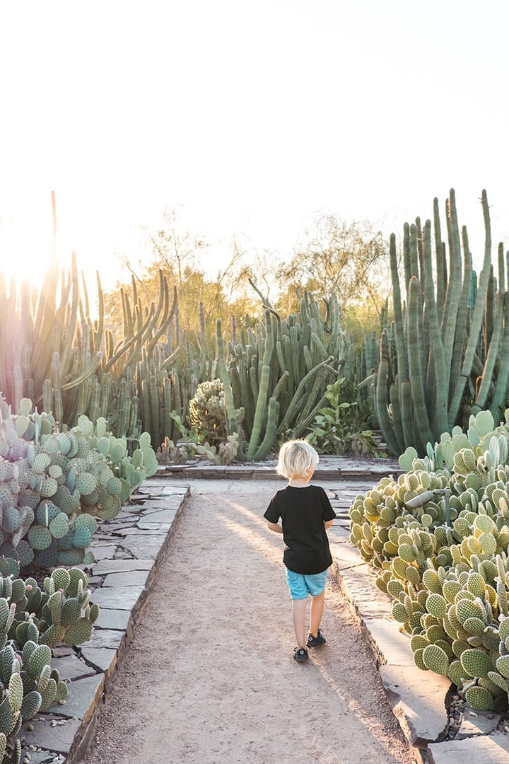 The Desert Botanical Gardens in Phoenix, Arizona