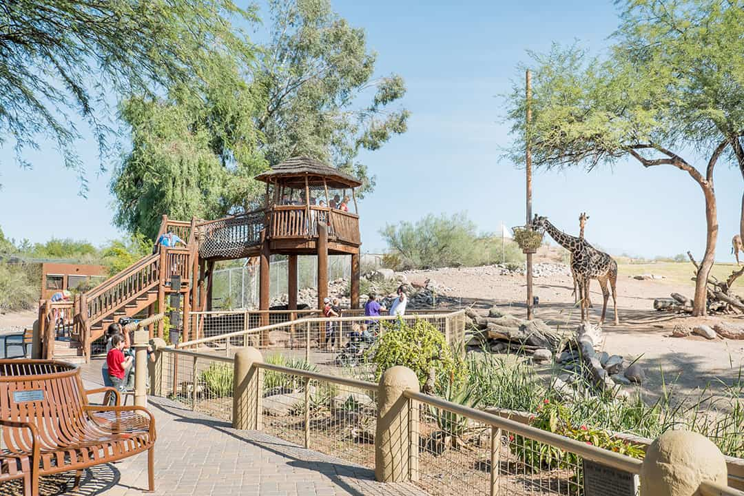 Things to do in Phoenix with Kids - the Phoenix Zoo