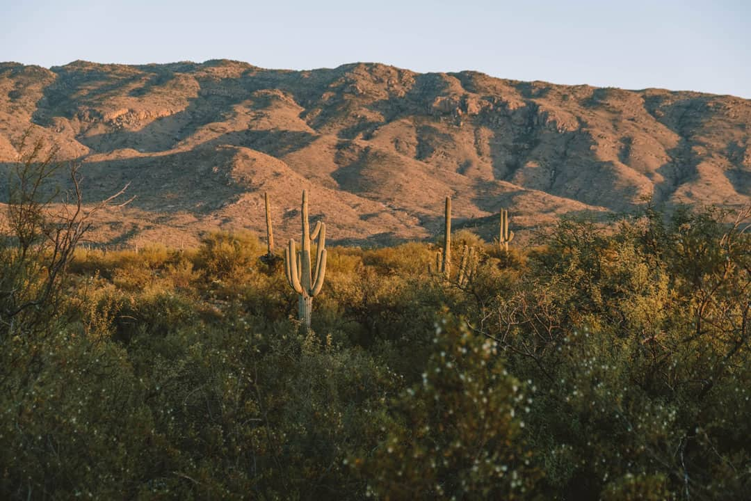 Hiking in Tucson in Saguaro National Park East