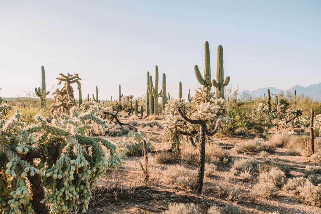 Easy hiking near Tucson on the Mica Loop Trail in Saguaro National Park