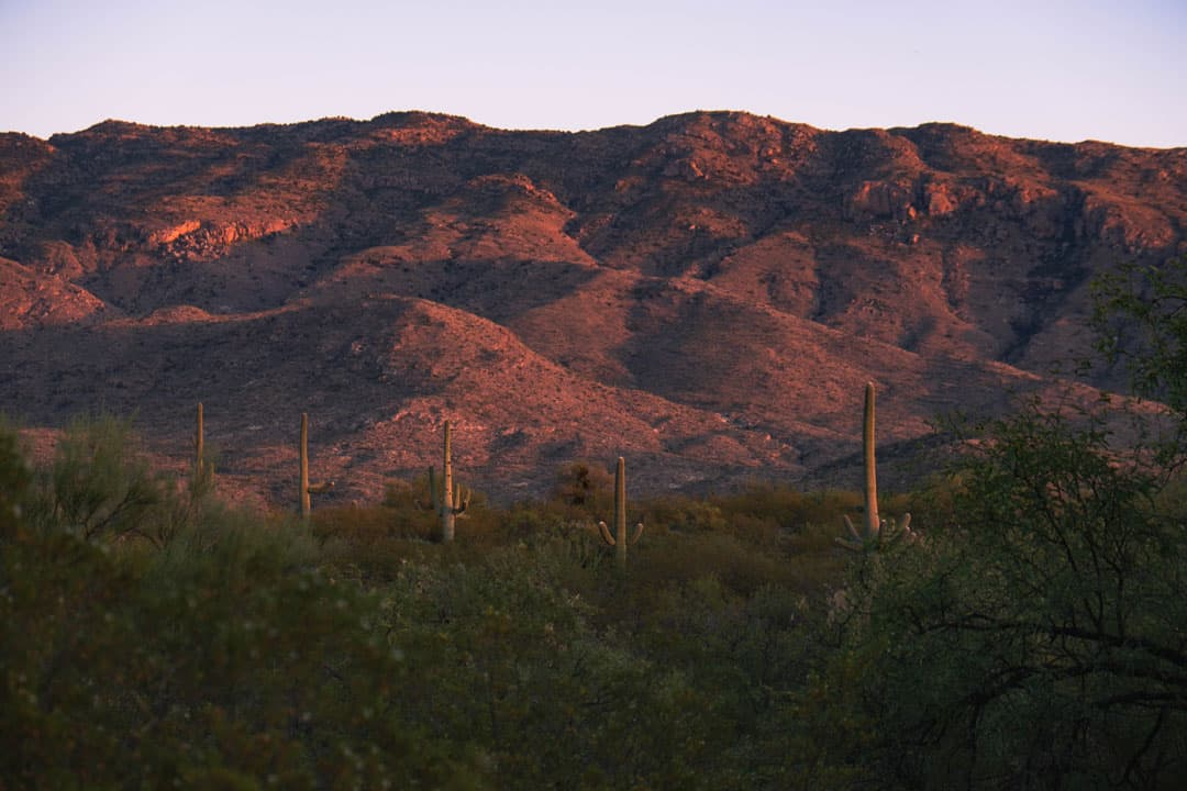 Sunset at Saguaro National Park in Tucson, Arizona