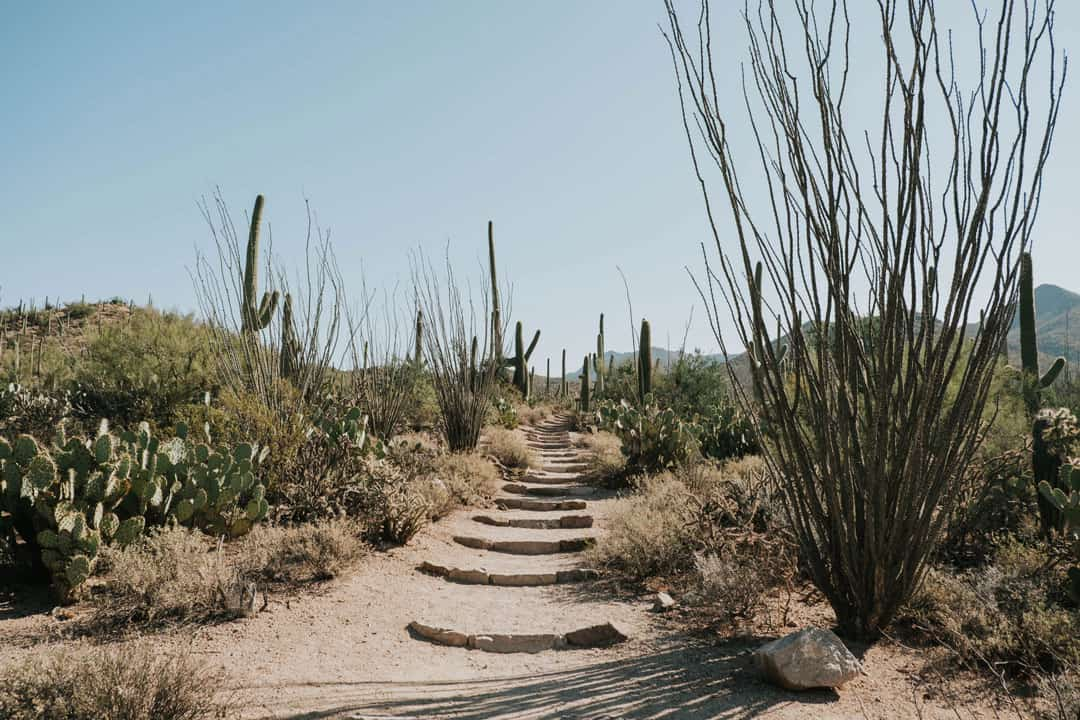 Valley View Trail in Saguaro National Park near Tucson, Arizona
