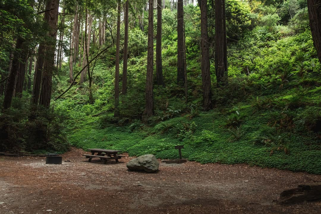 Campground at Limekiln State Park in Big Sur, California