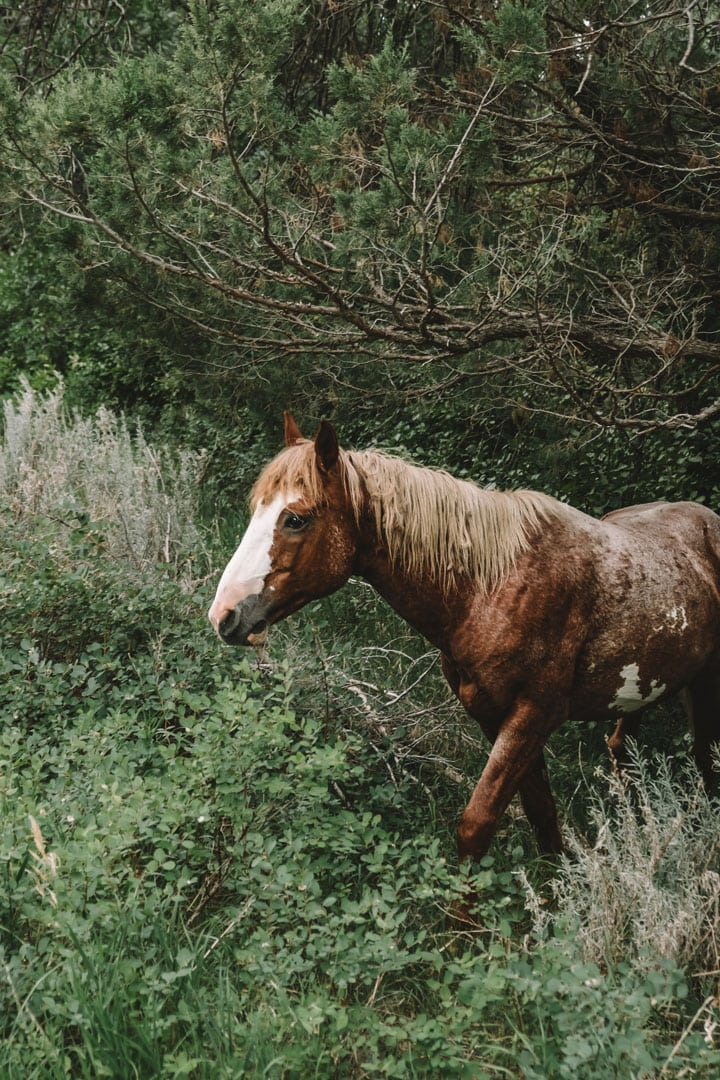 Wild horse in south unit of Theodore Roosevelt National Park
