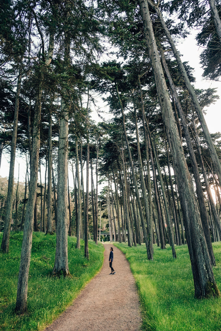 Hiking in the Presidio in San Francisco